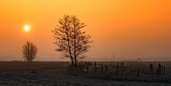 Orange (Jorden Esser) Tags: trees orange sun mist misty fog sunrise fence glow foggy fences serene grassland middendelfland nederlandvandaag fencefriday