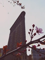Happy spring from NYC (Daniel Mark) Tags: nyc spring flatiron softtones iphone6 iphoneonly