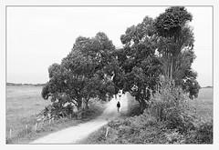 el camino del faro (M. Martin Vicente) Tags: lastres elcaminodelfaro