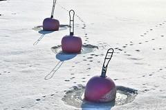 Embedded (jtunkelo) Tags: winter finland helsinki balticsea icy lumi itmeri wintery vuosaari 2016 kallahti