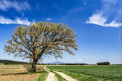 Serignan-du-Comtat2 (josefajardo84) Tags: de ventoux dentelles montmirail