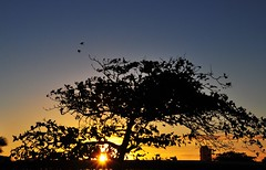 two birds (Ruby Ferreira ) Tags: sunset brazil birds brasil branches silhouettes pssaros silhuetas salvadorba northeastbrazilian atwindows