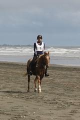 IMG_EOS 7D Mark II201604032351 (David F-I) Tags: horse equestrian horseback horseriding trailriding trailride ctr tehapua watrc wellingtonareatrailridingclub competitivetrailriding sporthorse equestriansport competitivetrailride april2016 tehapua2016 tehapuaapril2016 watrctehapuaapril2016