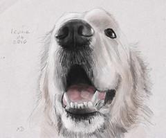 Icone (francoisedamery) Tags: dog chien dessin