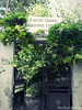 abandonment (braziliana13) Tags: door old tree green nature oldstyle greece abandonment chios ελλάδα πόρτα παλιά εγκατάλειψη χιοσ greekiland