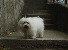 rencontre... (bulbocode909) Tags: chiens escaliers