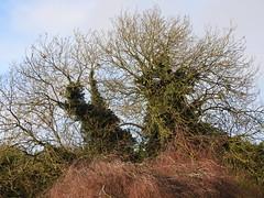 Nature (SJW_Pics) Tags: trees sky tree green landscape focus view pigeon sjwpics samwilsonpics