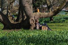 SLN_1602652 (zamon69) Tags: people flower tree person human blomma träd