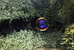 Original bubble (Helena Gleich) Tags: color film nature soap bubble iridescent
