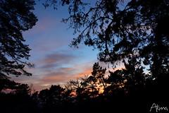 _AKU7120 (Large) (akunamatata) Tags: california sunset berkeley miller trail joaquin joachim