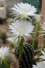 White (Radu Andrei B) Tags: bulgaria botanicalgarden balchik
