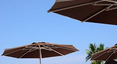 Plaj-Semsiyesi-09 (emsiye Evi) Tags: umbrella beachumbrella gardenumbrella patioumbrella plajemsiyesi bigumbrella umbrellahouse baheemsiyesi otelemsiyesi semsiyeevi