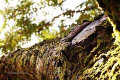 Campo 198 (Constanza Romero L.) Tags: chile autumn naturaleza tree musgo nature forest landscape arbol moss sony paisaje bosque trunk otoo alpha tronco gorbea sonyflickraward