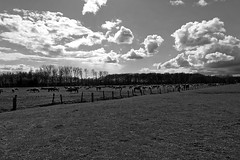 Wild Horses in black-and-white - Herd - 2016-002_Web (berni.radke) Tags: horse pony herd nordrheinwestfalen colt wildhorses foal fohlen croy herde dlmen feralhorses wildpferdebahn merfelderbruch merfeld przewalskipferd wildpferde dlmenerwildpferd equusferus dlmenerpferd dlmenpony herzogvoncroy wildhorsetrack