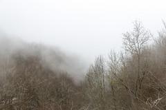 Baixa la boira (Ricard Snchez Gadea) Tags: winter espaa santafe planta fog canon arboles catalonia bosque rbol invierno catalunya es montaa niebla catalua muntanya abres bosc 6d 24105 montseny hivern airelibre boira 24105mm canonef24105mmf4lisusm canon24105 eos6d 24105canon santafedemontseny atalunya canonistas canon6d boirabaixa elvallsoriental canoneos6d 6dcanon 6deos