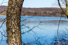 Bend or Break (david_sharo) Tags: lake tree canon moraine t5i davidsharo