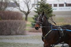 Mozartsplace training, April 24, 2016 (Taylor Racing) Tags: red racing ponder harness shores pei charlottetown artsplace mozartsplace