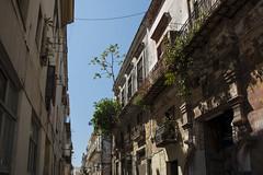 Kuba Havanna Bausubstanz Baum erobert Balkon 2 (Ruggero Rdiger) Tags: cuba havanna kuba lahabana 2016 besichtigung citystadt rdigerherbst