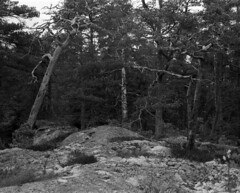 2016-April-24th_Porkkalanniemi_Graflex-Ektar_001 (Tatu Korhonen) Tags: finland fomapan100 kirkkonummi porkkala ektar35100mm adoxatomal49 graflex6x7rollfilmback fromkodakmedalist