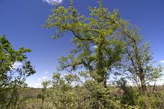 Baker wetlands (pdecell) Tags: lawrenceks bakerwetlands