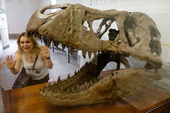 T-Rex Teeth (_Codename_) Tags: museum fossil skull dc washington teeth naturalhistory cecilia trex tyrannosaurusrex tyrannosaur nationalmuseumofnaturalhistory