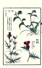 Top  Asiatic dayflower; Bottom  thistle (Japanese Flower and Bird Art) Tags: flower art japan japanese book thistle picture kiyoshi cirsium asteraceae communis dayflower woodblock asiatic takizawa ukiyo commelina commeliniaceae readercollection