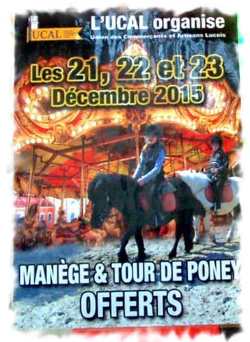 Manège & poneys (14)