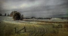 Winter in the Fields (Carolyn Little (AWAY)) Tags: winter snow fence landscape frost novascotia tracks textures fields hantscounty daarklands