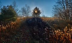 A trail at Schneider's (virgil martin) Tags: mist ontario canada landscape frost fallcolors gimp waterloo morningmist schneiders microsoftice oloneo olympusomdem5