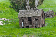RHM_0932-1307.jpg (RHMImages) Tags: trees green abandoned landscape nikon decay shack livermore ebrpd brushypeak d810 ebparksok