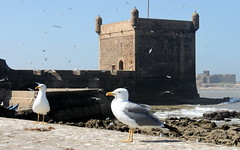 essaouira seagulls (2) (kexi) Tags: ocean africa blue 2 two sky seagulls tower water birds canon coast march ancient couple pair atlantic morocco maroc fortress essaouira 2015 maroko instantfave