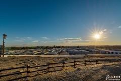 The Park Sunrise (rvraddict@att.net) Tags: vacation sun sunrise fence river palms nikon desert wide sunny wideangle resort tokina palmtrees palmtree trailer d7100 tokina116 tokina111628