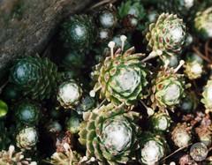 Blind (Kleinbildphotographie) Tags: plants film nature analog 35mm nikon f55
