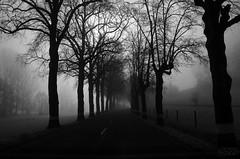 Black Road (fs999) Tags: auto road trees mist fog paintshop driving nebel pentax wide route arbres paintshoppro 20mm luxembourg bäume brouillard luxemburg k5 corel aficionados pentaxist landstrasse soligor artcafe ontheroadagain fahrend lëtzebuerg 80iso pentaxian ashotadayorso justpentax conduisant topqualityimage wideauto zinzins flickrlovers topqualityimageonly fs999 fschneider pentaxart soligorcdwideauto20mmf28 soligor20 pentaxk5iis k5iis x8ultimate paintshopprox8ultimate