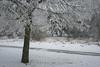 IMG_30312 (IdaAsplund) Tags: trees winter white snow tree forest season vinter path skog snö träd årstid