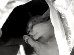 au (volantindebolsa) Tags: white blanca gato lengua gatita gatito