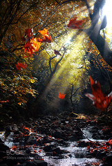 Leaves on air.. (fotoflatratech) Tags: trees light sun nature water leaves river natural wind rays makis 500px bitos ifttt fotoflatrate