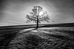 Tree of Light (Frank Busch) Tags: light blackandwhite bw sunlight tree monochrome field grass sunrise germany blackwhite meadow pöcking frankbusch frankbuschphotography imagebyfrankbusch wwwfrankbuschphoto