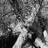 Big Morongo Canyon Preserve : winter (ken.larmon) Tags: california trees nature pathways morongovalley xmarksthespot bigmorongocanyonpreserve onahike