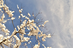 February (nls451) Tags: blue winter light sky cloud snow nature berries branches february nls451