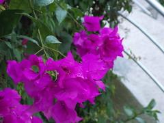 DSCN2516 (Alejandra Fajardo) Tags: flowers naturaleza 3 nature landscape mexico hotel la mujer plantas iii jardin paisaje escultura trendy chic suites reserva milenio qro bugambilia querataro