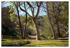 O'Melveny Park (mhocter) Tags: california park trees canon eos canoneos ef losangelescounty granadahills canonef ef247028l canonef247028l canoneos5dmarkii omelvenypark 5dmarkii 5d2 canon5dmarkii
