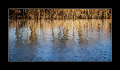 Reflection 2 (tkimages2011) Tags: park blue sunlight reflection water reeds sankey valley sthelens merseyside hifiwigwam