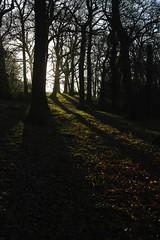 Grangewood SDIM1804 (szczel) Tags: southlondon croydon intothesun oldforest grangewoodpark