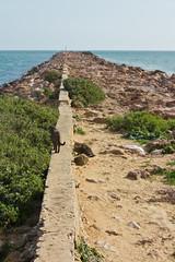 End of a country. (Hlder Cotrim) Tags: portugal vertical decay g v gato f fim algarve locais abandono runa beautifuldecay vilarealdesantoantnio