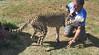 (LKB_Photography) Tags: park lion johannesburg lionpark