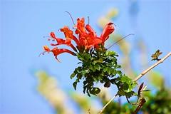 Spring is here,Bodrum Gmlk (yilenes) Tags: flower turkey turkiye bodrum yildirim turchia turkei gumusluk yilenes yilenesphoto