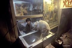 Beijing128 (siggi.martin) Tags: china people cats man men animal cat asia asien beijing menschen kiosk mann katze katzen peking tier männer verkaufskiosk
