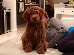 Shelby's Dexter!  What a cutie!!
