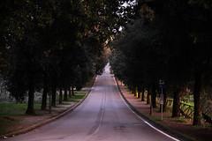 IMG_4789 (Valentina Ceccatelli) Tags: trees sunset italy canon eos no tuscany 5d prato valentina markii carmignano ceccatelli valentinaceccatelli tramontocountry